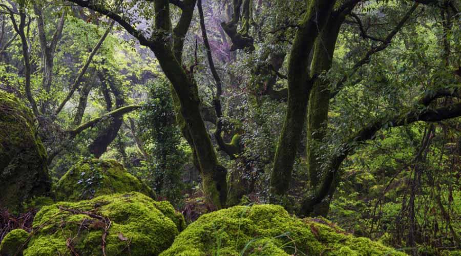 bosco del sasseto torre alfina acquapendente