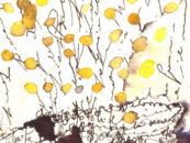 Premio Mimosa, il concorso letterario dedicato alle donne
