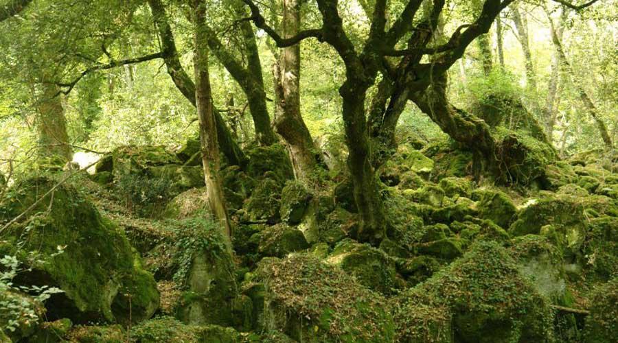 Il magico bosco del sasseto di torre alfina