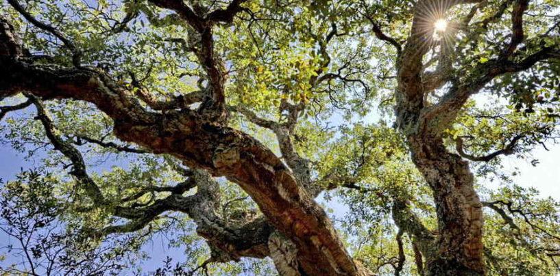 """""""Mosaico Verde"""", l'Università della Tuscia sostiene il progetto per l'ambiente"""