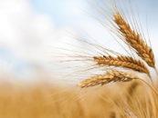 Cerealia, la festa dei cereali