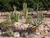 Giornata Nazionale del Profumo: passeggiata all'Orto Botanico di Viterbo