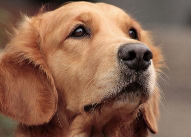 """""""Un cuore a 4 zampe"""", uno spot per l'adozione dei cani"""
