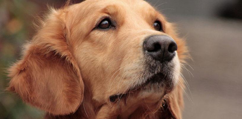 Il Comune di Avigliano Umbro in aiuto dei cani