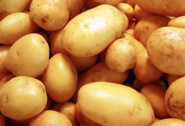 A Vetralla la Festa della Patata tra gusto, musica e sostenibilità