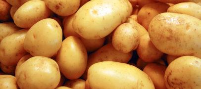 Festa della Patata a Vetralla, ci sono anche i Flaminio Maphia