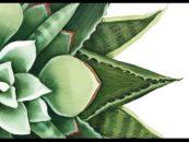 Kaleidos – Mostra di Daniela Rogani