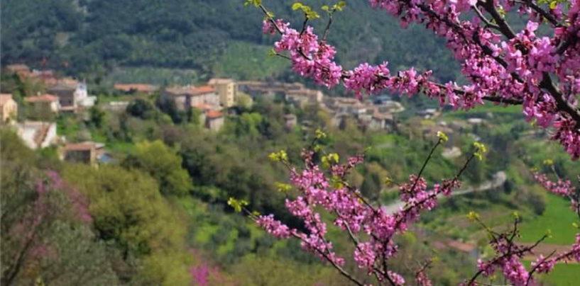 L'albero di Giuda che colora di rosa e lilla la Valnerina