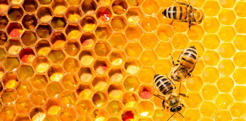 """Il comune umbro di Acquasparta diventa """"amico delle api"""""""