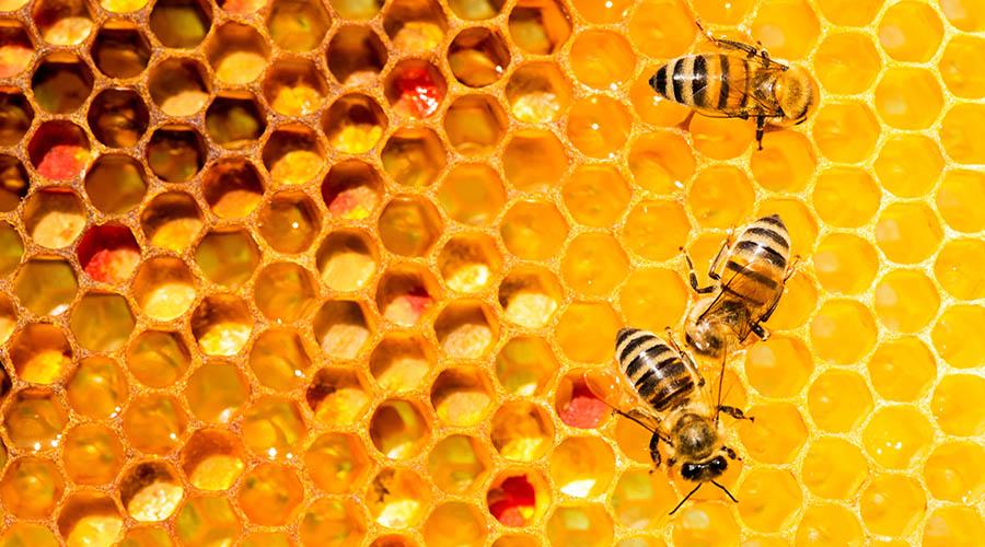 api ape miele