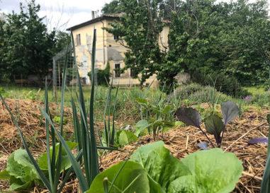 """Centro di Palmetta: """"Orto 21"""" e """"Radici"""" le nuove attività a Terni"""