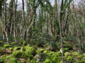 Selva del Lamone, un'escursione nel cuore di una foresta affascinante