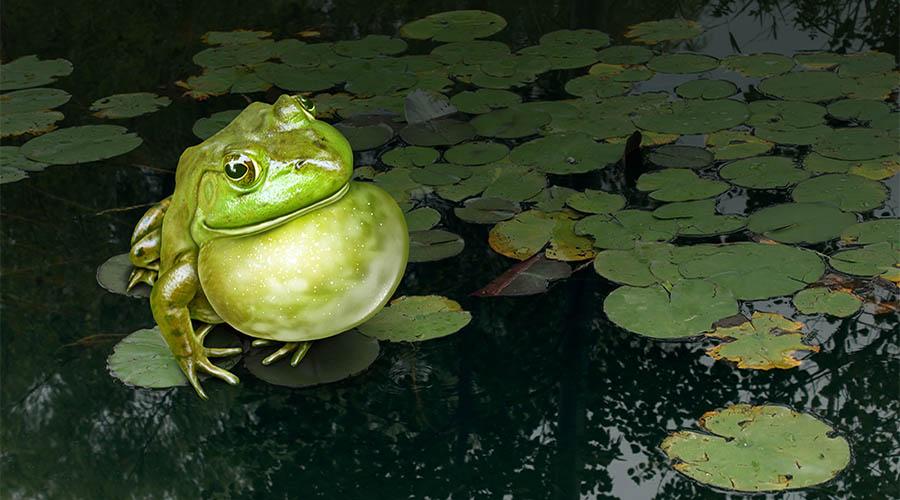 natura rana animali
