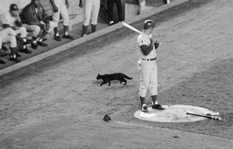 chicago cubs gatto nero